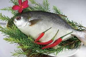 越南金鲳鱼